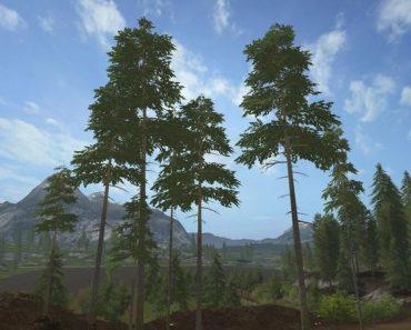 placeable-pine-standard-set-v1_1