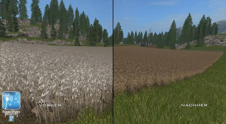 forgotten-plants-soybean-v1-0_4