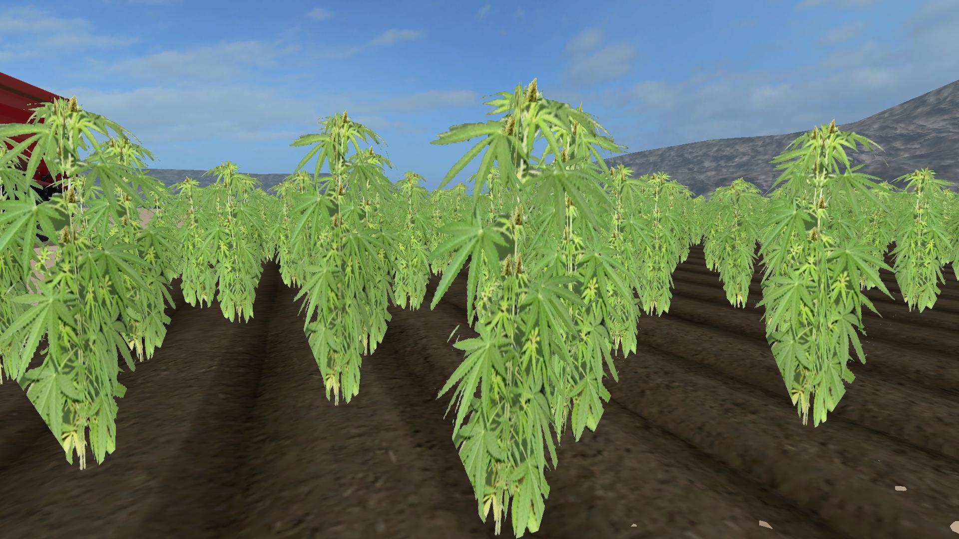 Cannabis Crop v1.0